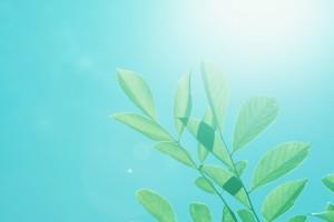 Respiración holotrópica: reactivar la propia regulación del organismo