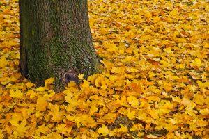 El otoño de los árboles